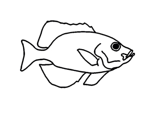 Index likewise I0000hXLWkI18NU8 besides AC743E22 also Marine Inhabitants Names Pencil Sketch By 520435513 further Native American Mythology. on deep water fish species